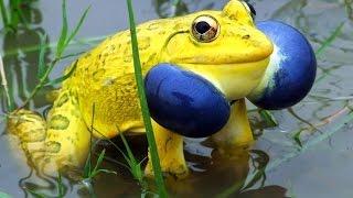 Животные необычной раскраски! Unusuale colored animals!