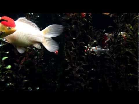 Fish TV HD One Hundred Thirty Seven