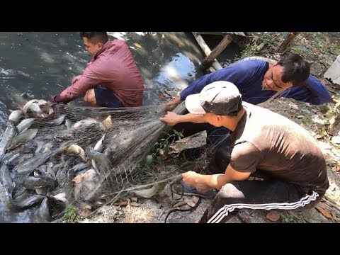 Unbelievable Three Fisherman Defeated by 200 BIG Catfish!