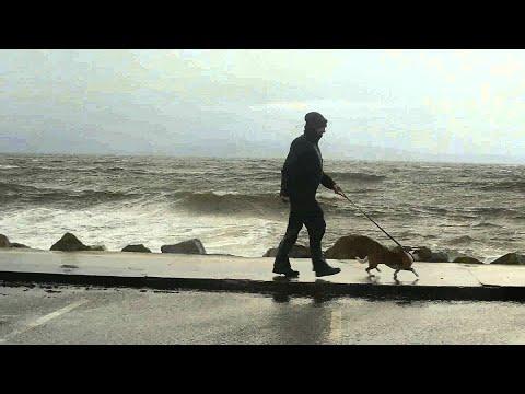 VIDEO: El perro que es fanático de las olas del mar