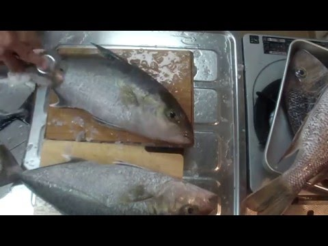 Cleaning Fish To Prepare For Aging