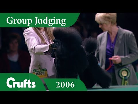 Miniature Poodle wins Utility Group Judging at Crufts 2006