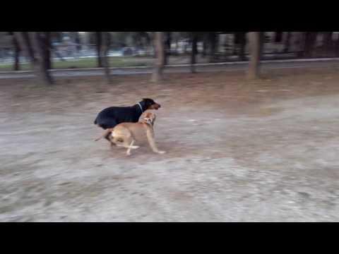 Rocco & Django- better than brothers