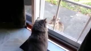 Прикольные кошачьи драки! УМОРА!!!
