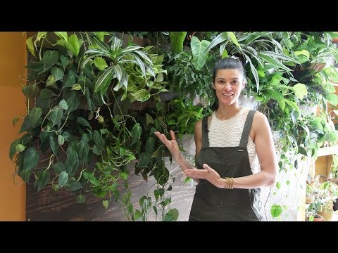 Ep 028: Plant One On Me: DIY Sub-irrigated Green Wall