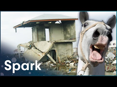 Sense Of Danger: How Animals Anticipate Disasters (Nature Documentary) | Spark