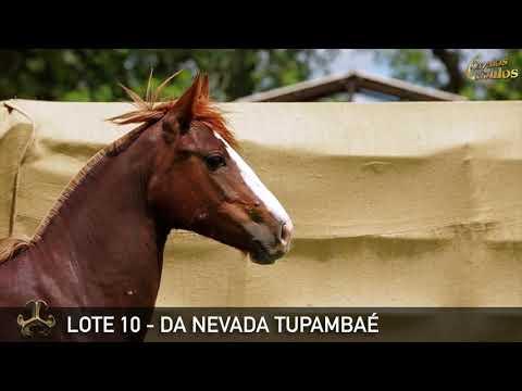 LOTE 10   DA NEVADA TUPAMBAÉ