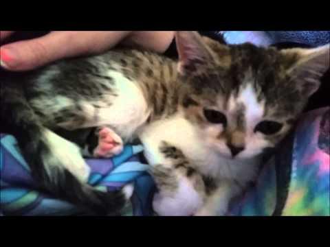 Special Needs Foster Kitten Vet Visit!
