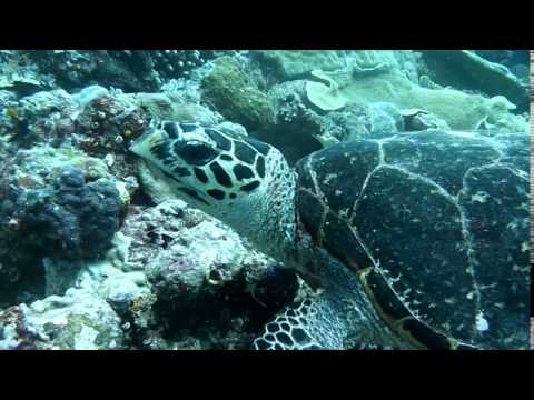 3 MINUTE GUIDE TO PALAU