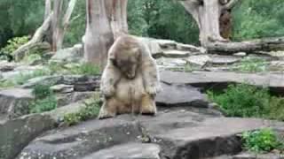 Eisbär Knut in  Berlin- 6 Monate alt