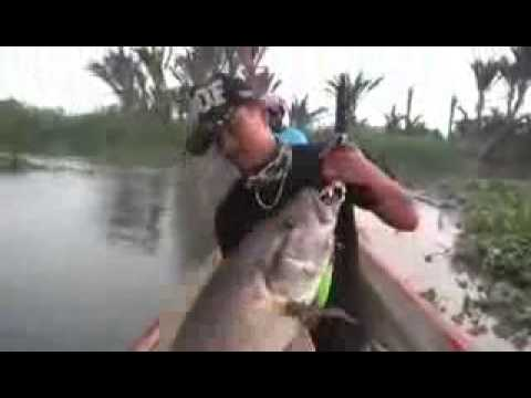 Unduh 57 Gambar Ikan Mujair Raksasa HD Terbaru