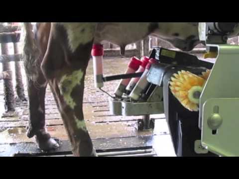 High tech Dutch dairy farm