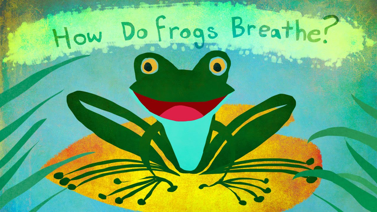 How Do Frogs Breathe? - YouTube - photo#26