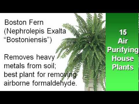 15 Air Purifying Houseplants
