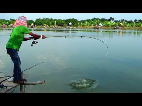 Fatty Catla Fish VS Thin Fish Hunter