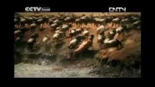Великая миграция диких животных