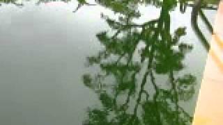 five days of rain