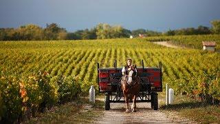 Bordeaux  - region winiarski.  Część I - wina czerwone