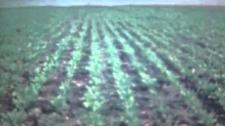 Хроники Скопина 1960-1990. Сельхозработы(, 2012-11-23T13:39:14.000Z)