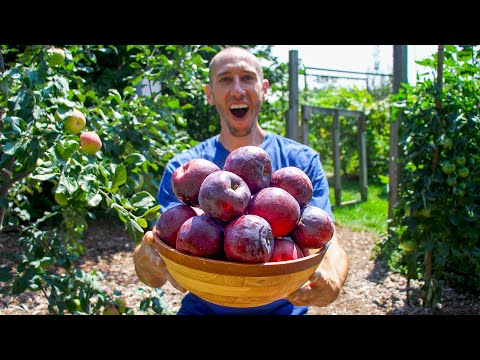 How to Easily Grow Apples in Your Backyard Garden, Complete Growing Guide