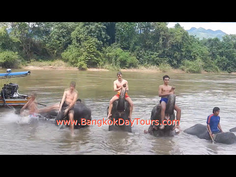 1-extraordinary-elephant-day-trip-via-bangkok-day-tours-(original-only-by-bangkokdaytours-ltd.!)