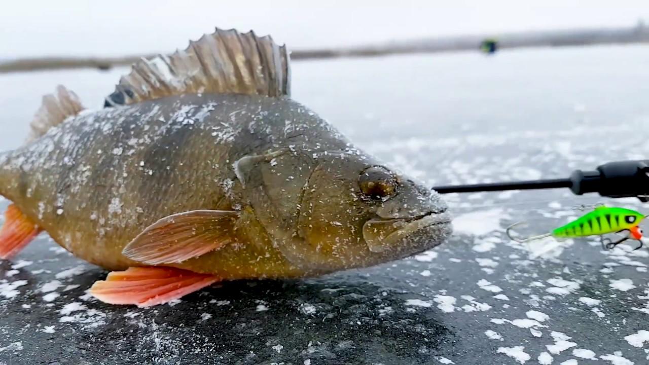 Окунь на балансир. Первый лед 2017. Леонидыч на рыбалке #1