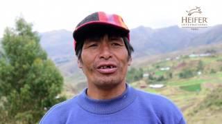 Heifer Perú - Ccorca