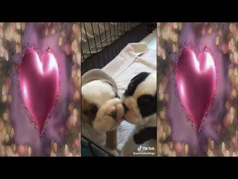 Lovey New Born Puppies Tiktok Compilation
