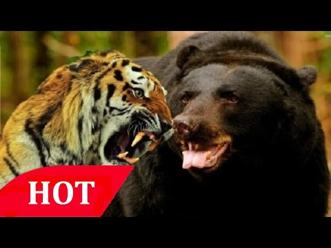 Crimes Against Nature Tiger Traffic ''Endangered Animals'' National Geographic Wild Documentary HD