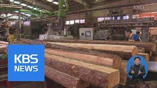 낙엽송, 경제수로 인기 급상승 | KBS뉴스 | KBS…