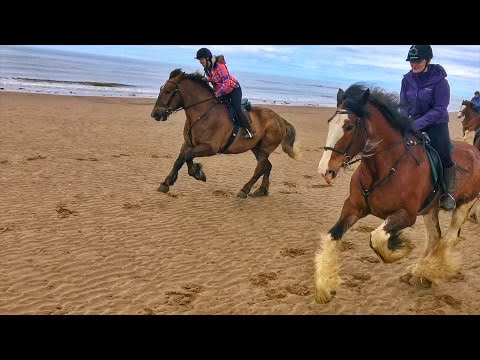 Cumbrian Heavy Horses Beach Ride By Drone & GoPro HD