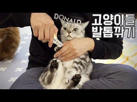 정말 쉬운 고양이들 발톱 깎기 Clipped the claws of the SuriNoel cat family【수리노을 SURI&NOEL】