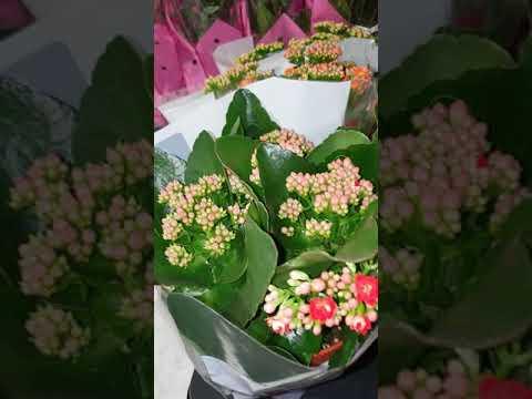 Piante e fiori De Simone (work in progress🔝)