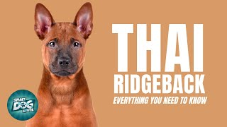 Thai Ridgeback Dog Breed Guide | Dogs 101  EXTREMELY Rare Guard Dog