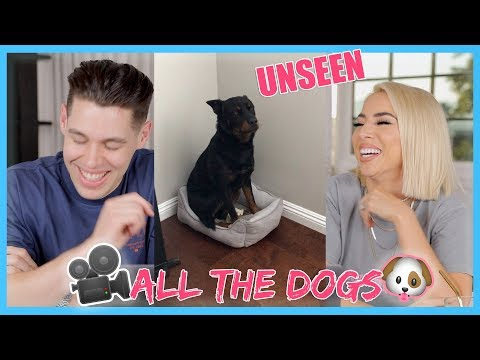 The Dog Diaries   Unseen Footage