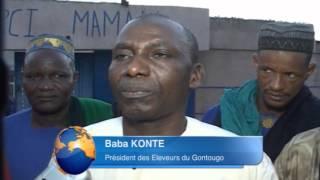 Gontougo: Les éleveurs de bétail de Boukani s'organisent pour une meilleure efficacité