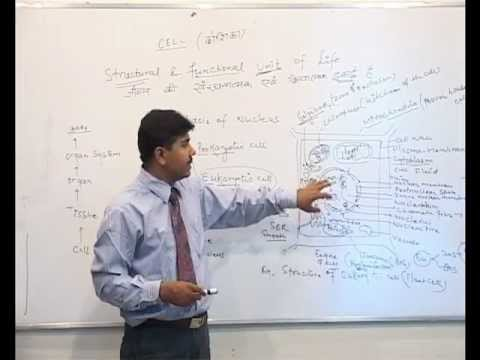 All about eukaryotic cell by dr uc pachouri hindi youtube all about eukaryotic cell by dr uc pachouri hindi ccuart Images