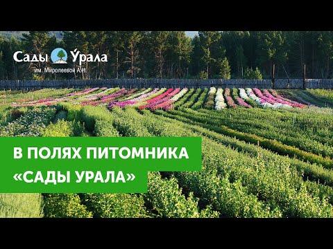 В полях Питомника Сады Урала - сентябрь 2016