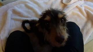 GUNDOGRESCUE CACI 保護犬ポップ君 thumbnail