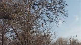 The San Joaquin River National Wildlife Refuge Nature Trail