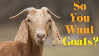 How to Get Started with Goats