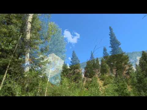 Naturalist Notebook - Colorado Rain