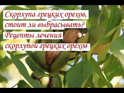 Скорлупа грецких орехов, стоит ли выбрасывать Рецепты лечения скорлупой грецких орехов