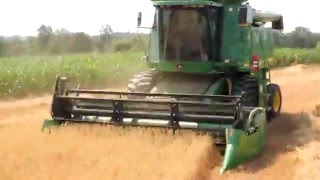Harvesting Oat Crop