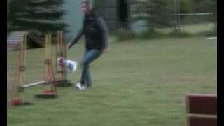 Biewer Yorkshire Terrier Agility Training