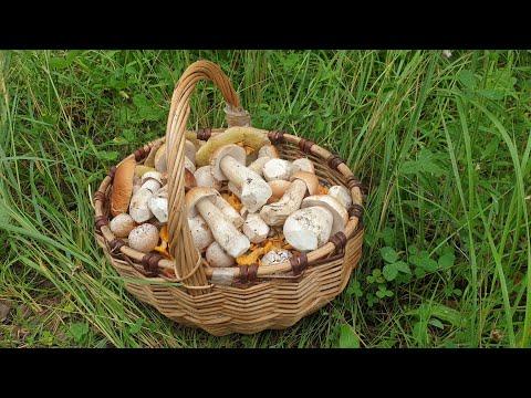 Вопрос: Когда пойдут грибы в 2020 году?