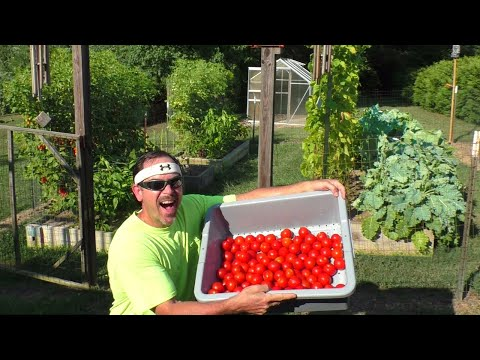 Mega HUGE July 16th Garden HARVEST Grow FOOD at Home container gardening organic survivalist prepper
