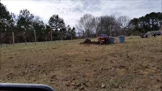 Planting Mulberry and Persimmon Tree