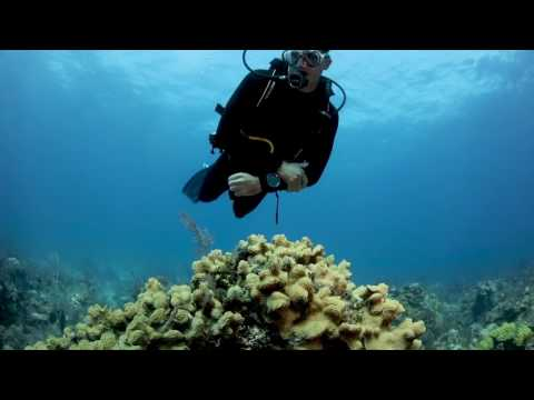 Breathe Easy Underwater with Cressi Scuba Diving Gear