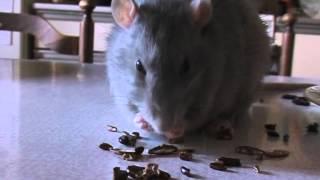 Полезно грызть арбузные семечки